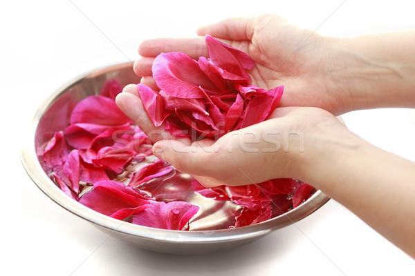 Mão estância termal mãos isolado branco rosa Foto stock © joruba