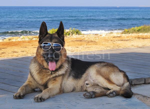 犬 眼鏡 ビーチ 楽しい サングラス ペット ストックフォト © joruba