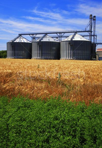 Fazenda campo de trigo grão agricultura natureza paisagem Foto stock © joruba