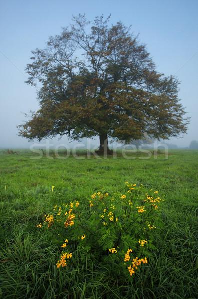 árvore névoa prado flor grama estrada Foto stock © joruba