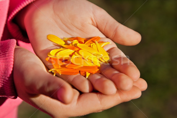 цветок лепестков девушки ладонями лет Сток-фото © joseph73