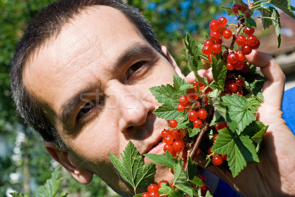 Man eating redcurrant Stock photo © joseph73