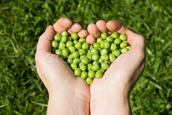 Ręce zielone groszek serca Zdjęcia stock © joseph73