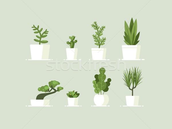 Houseplant in pots Stock photo © jossdiim