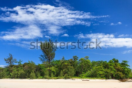 Forest and white sand Stock photo © Juhku