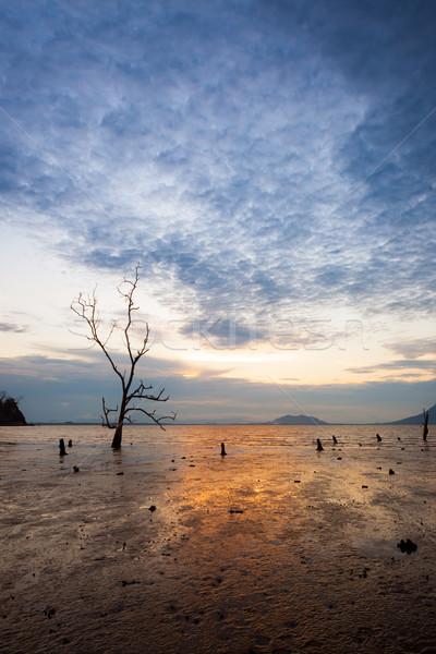 Magányos fa sáros tengerpart naplemente alacsony Stock fotó © Juhku