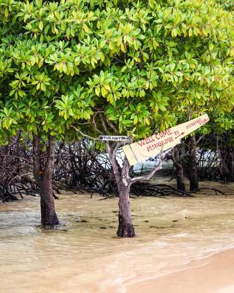 тур знак дерево Бали Индонезия воды Сток-фото © Juhku