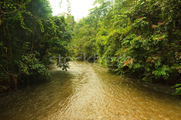 Jungle rivier borneo water achtergrond groene Stockfoto © Juhku