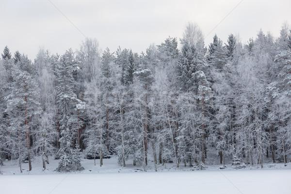 Inverno lago cenário Finlândia noite pôr do sol Foto stock © Juhku