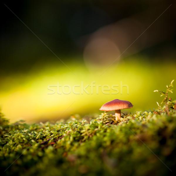 Színes kilátás gomba moha étel fű Stock fotó © Juhku
