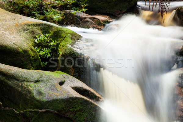 Klein stream jungle park Maleisië borneo Stockfoto © Juhku