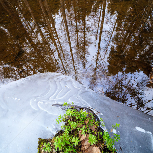 Partially frozen forest river detail Stock photo © Juhku