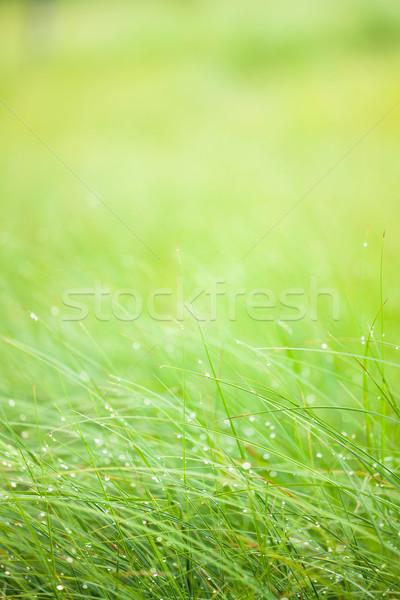 Streszczenie wilgoć trawy rosa świetle liści Zdjęcia stock © Juhku