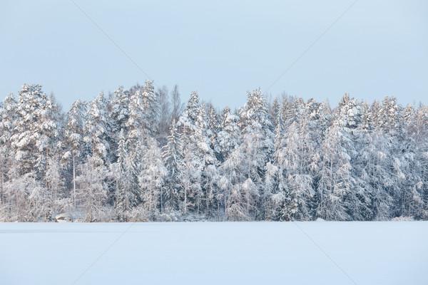 Kış göl manzara Finlandiya akşam gün batımı Stok fotoğraf © Juhku