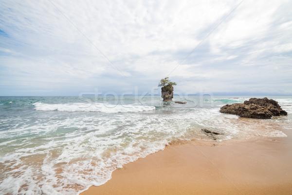 Stock fotó: Kő · fa · felső · homok · tengerpart · víz