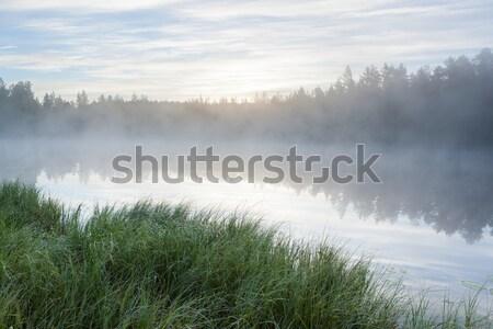 午前 森林 池 風景 フィンランド ストックフォト © Juhku