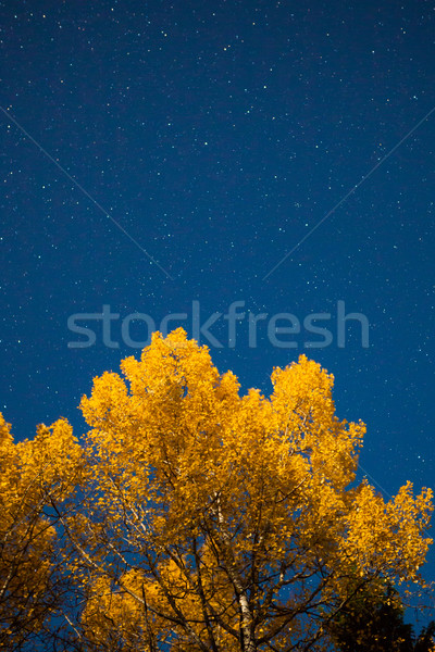 Yellow tree and starry sky at autumn night Stock photo © Juhku