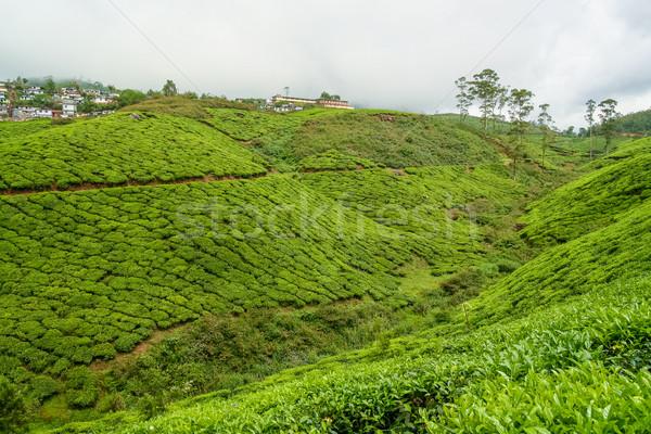чай Индия облачный день лист деревья Сток-фото © Juhku