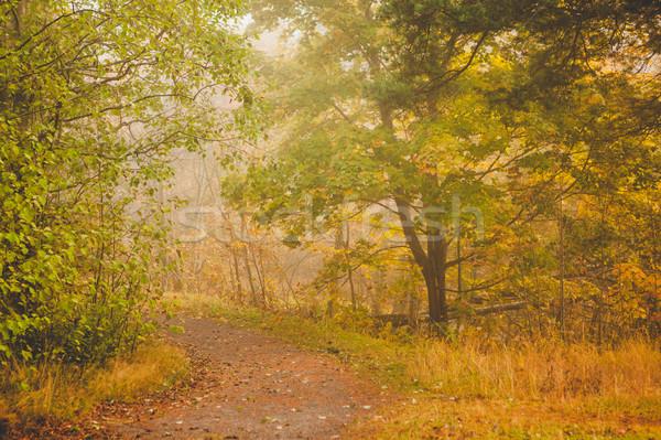 Mattina autunno foresta natura panorama Foto d'archivio © Juhku