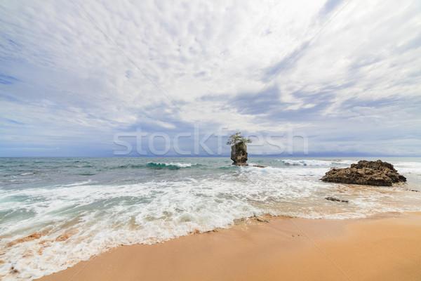 Rock islet and tree on top near sand beach Stock photo © Juhku