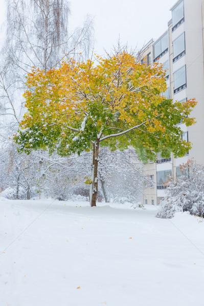 Primeiro neve bordo árvore outono cores Foto stock © Juhku