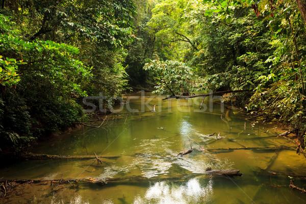 小 川 ジャングル ボルネオ島 マレーシア 葉 ストックフォト © Juhku