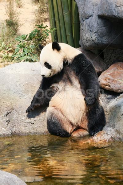 Panda near water Stock photo © Juhku