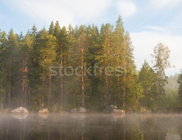 Lakeside forest at morning fog Stock photo © Juhku