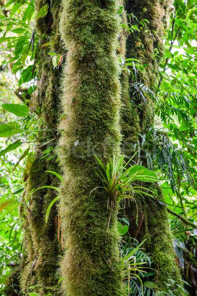 Mousse augmenté forêt tropicale nuage forêt Photo stock © Juhku