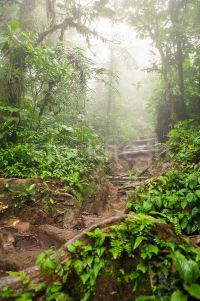 Hiking trail in lush rainforest Stock photo © Juhku