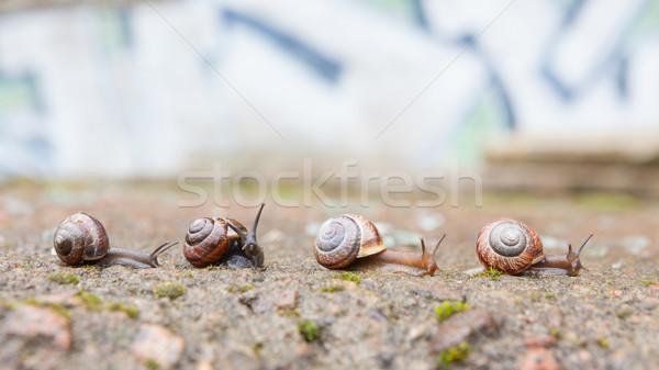 Gruppe wenig vorwärts städtischen Garten Team Stock foto © Juhku