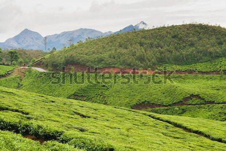 чай Панорама Индия облачный день природы Сток-фото © Juhku