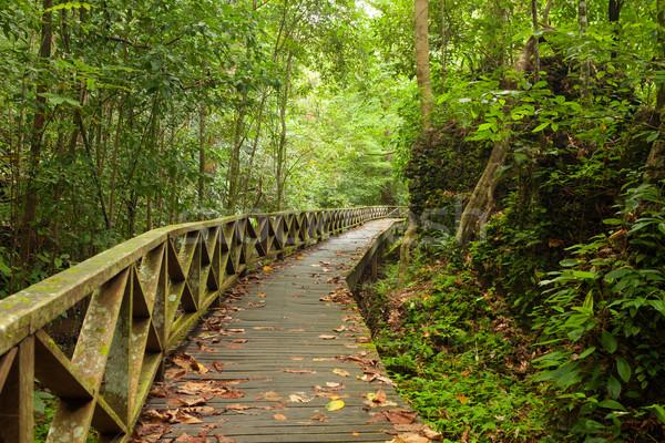 Boardwalk in dense rainforest Stock photo © Juhku