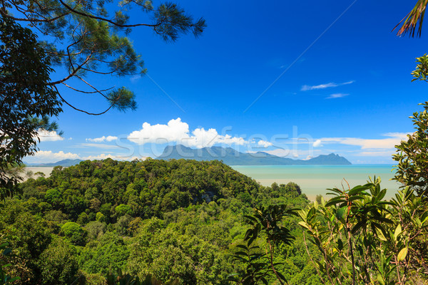 Tropical landscape over jungle and hills Stock photo © Juhku