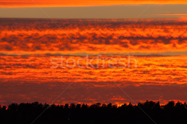 Fiery red sunset clouds Stock photo © Juhku