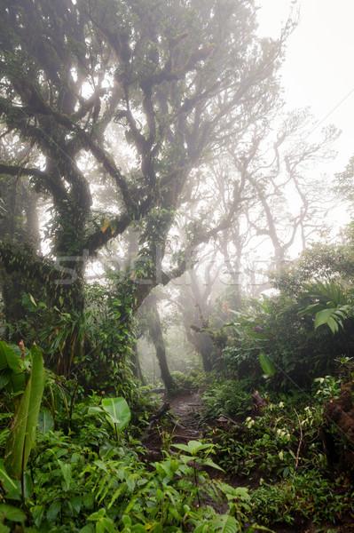 Profundo exuberante brumoso selva Costa Rica Foto stock © Juhku
