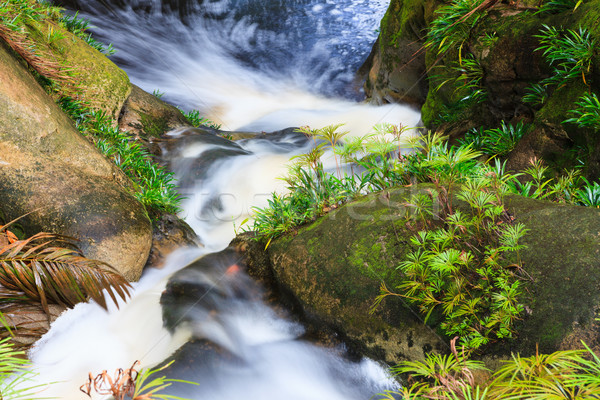 Stock photo: Small waterfall in jungle