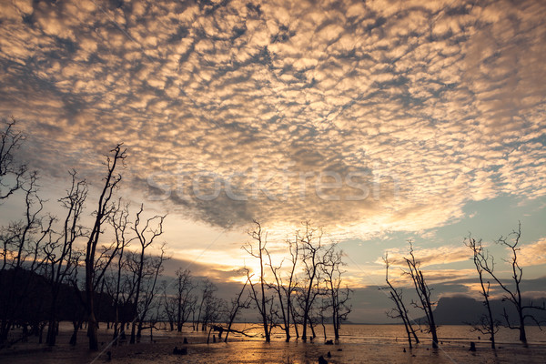 Dead trees and muddy beach at sunset Stock photo © Juhku