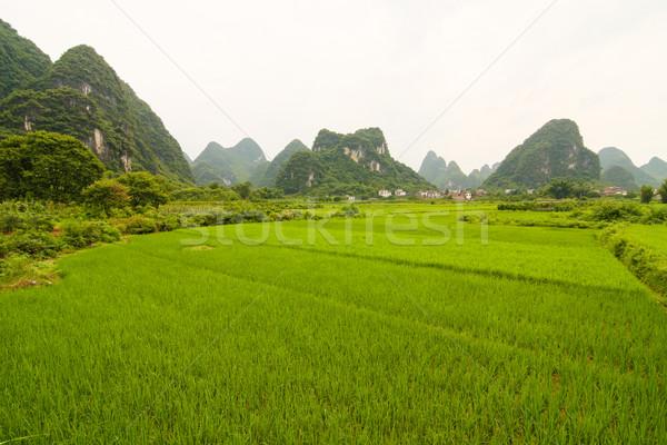 Zuiden China rijstveld gras zomer rock Stockfoto © Juhku