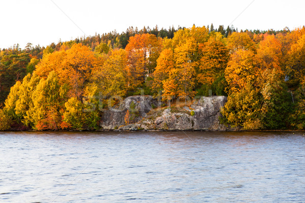 Autumn color in trees near lake Stock photo © Juhku