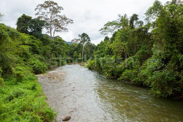 Dzsungel folyó Borneo kicsi víz fa Stock fotó © Juhku