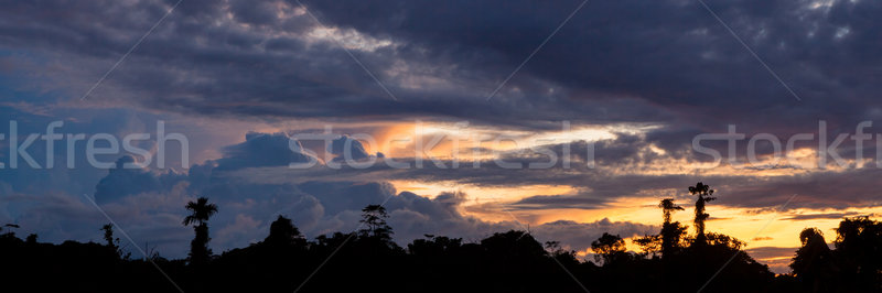 Tropicales coucher du soleil forêt tropicale silhouette nuages nature Photo stock © Juhku