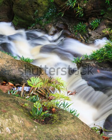 Küçük çağlayan orman park Malezya borneo Stok fotoğraf © Juhku