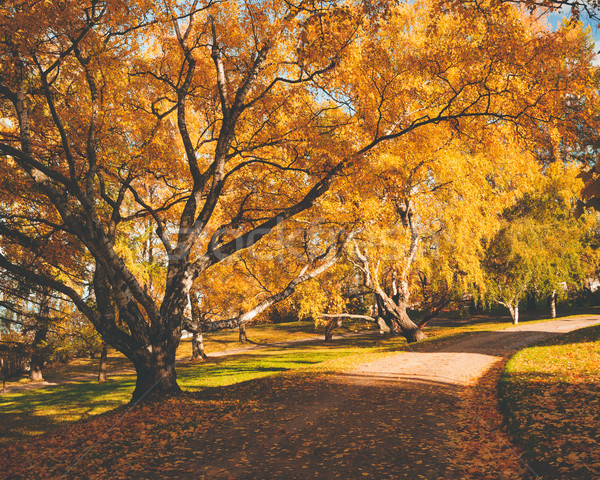 Peaceful park with autumn colors Stock photo © Juhku