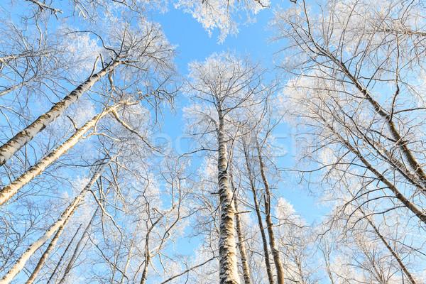Nieve cubierto árbol perspectiva vista Foto stock © Juhku
