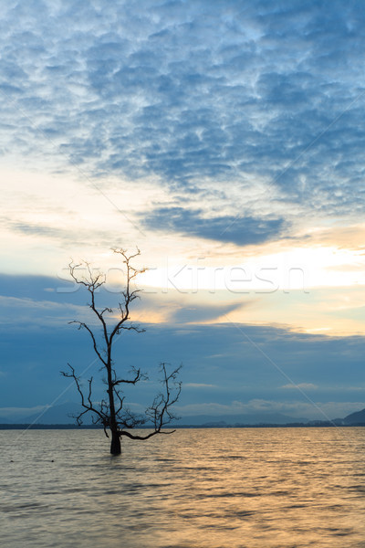Lonely tree in water at sunset Stock photo © Juhku