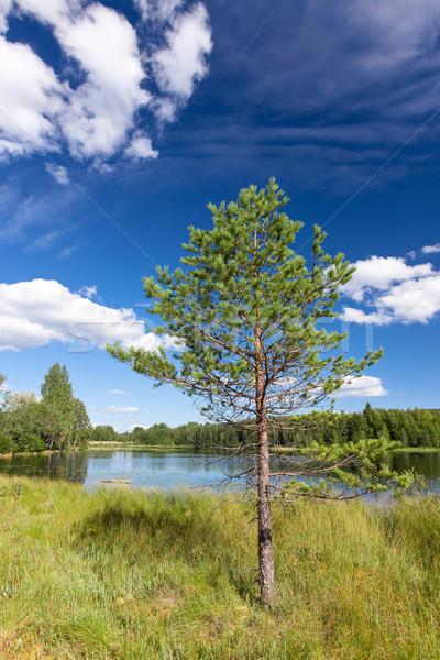 Słoneczny krajobraz Finlandia sosna niebo Zdjęcia stock © Juhku