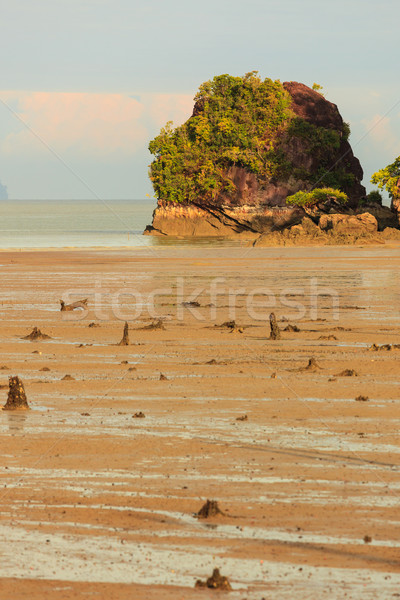 Tropical beach at low tide sunrise Stock photo © Juhku