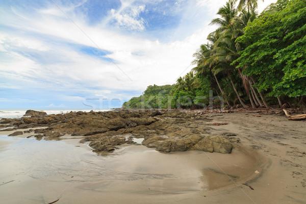 Spiaggia alberi Costarica foresta sfondo Ocean Foto d'archivio © Juhku