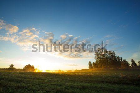 Tranquil grassland at sunrise Stock photo © Juhku